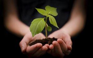hand-holding-plant-ftr